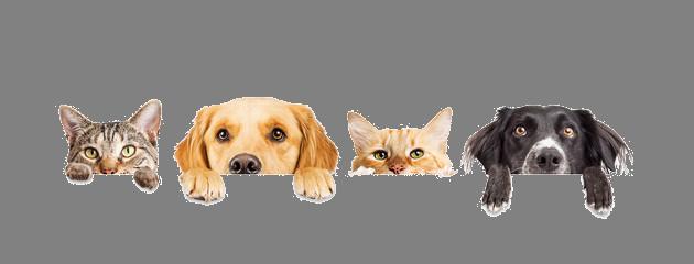 Hund-Katz